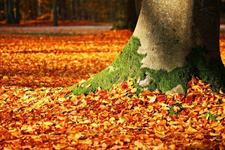 Neue Bäume braucht die Stadt – Foto: © rihaij / Pixabay