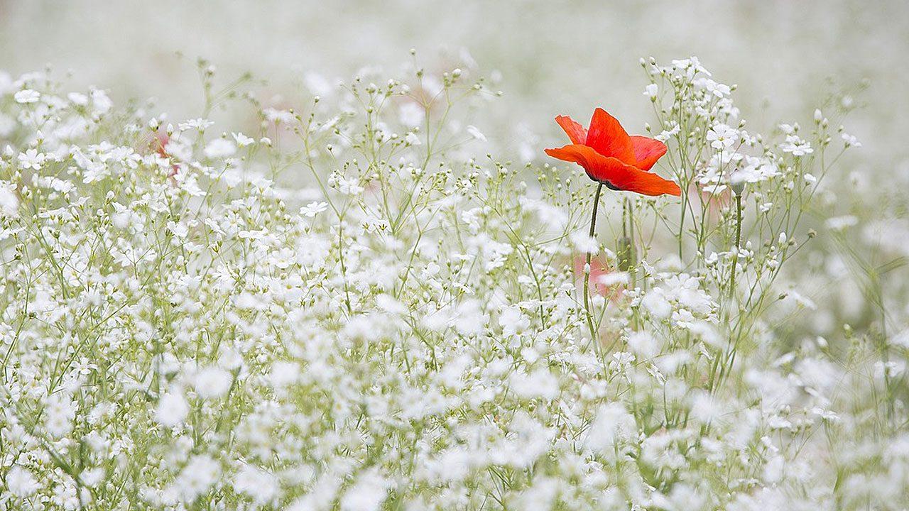 1. Verzichte auf Pestizide. Sie zerstören einen guten Teil der Nahrungsgrundlage für die Tiere, die du in deinen Naturgarten locken willst. - Fotocredit: Pixabay/Lee_seonghak