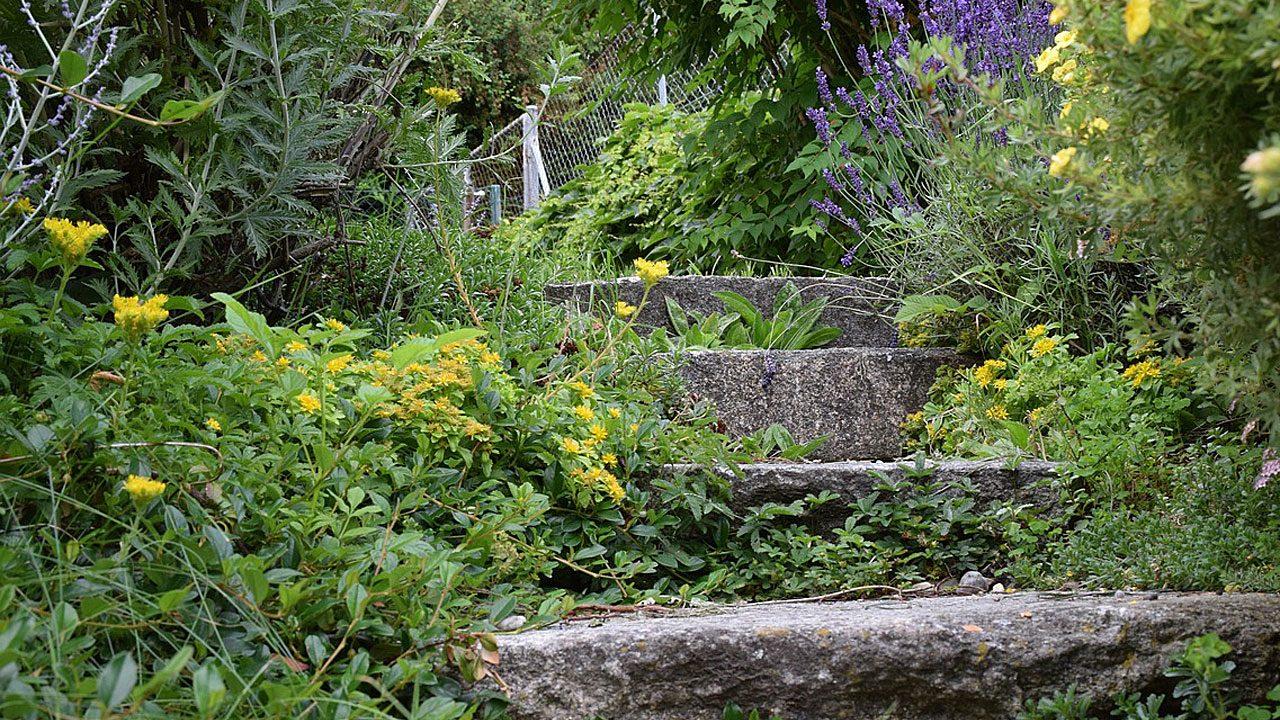 4. Lass nicht einfach deinen Rasen verwildern. Säe und setze eine Vielfalt an Pflanzensorten. - Fotocredit: Maryam62