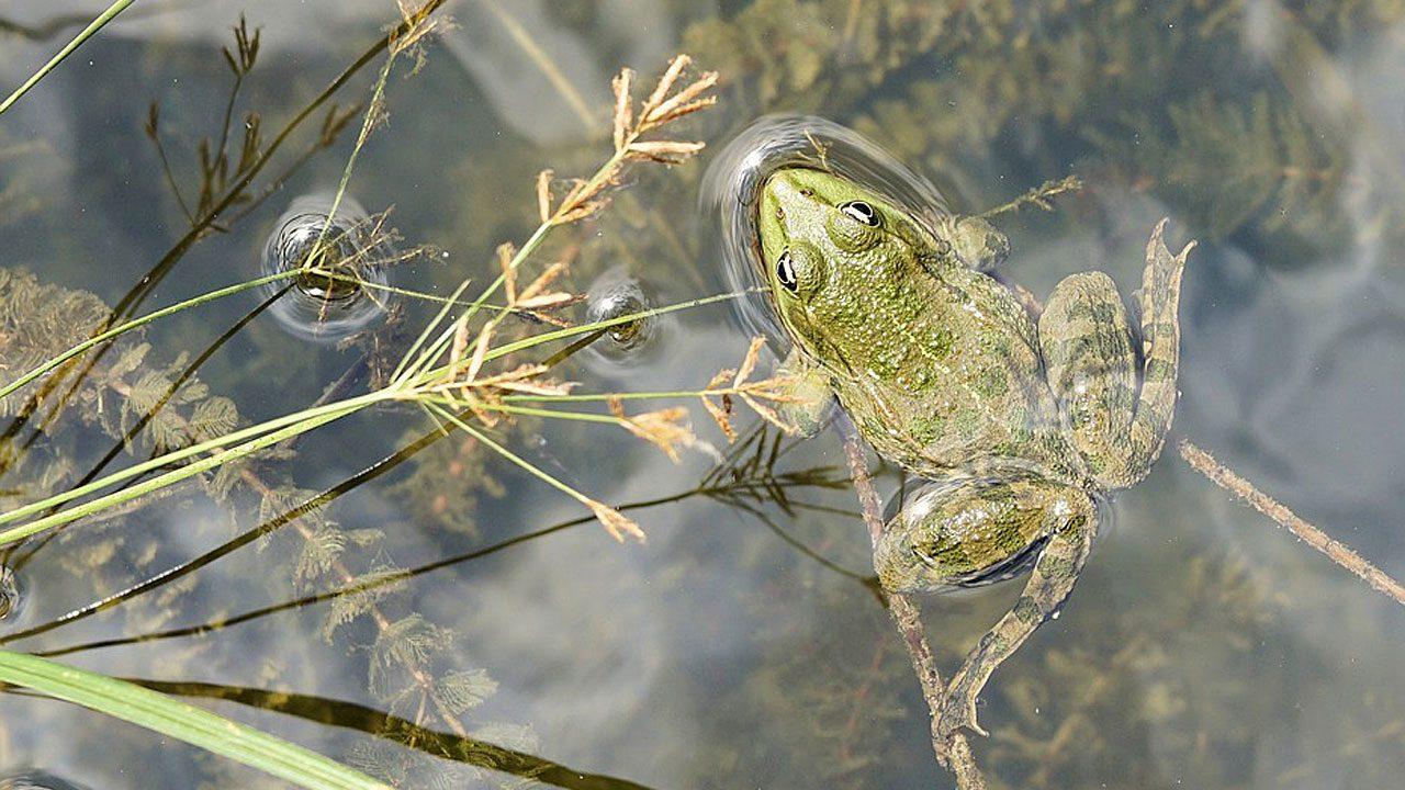 2. Leg einen Teich an. Teiche locken Vögel, Frösche und Libellen an. - Fotocredit: Pixabay/webandi