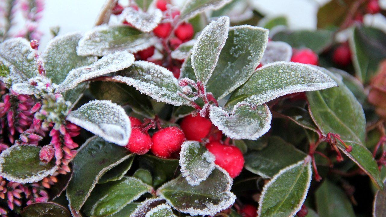 1. Denk an deine Pflanzen! Sie brauchen jetzt die richtige Versorgung für den Winter! - Fotocredit: Pixabay/-utekuehne