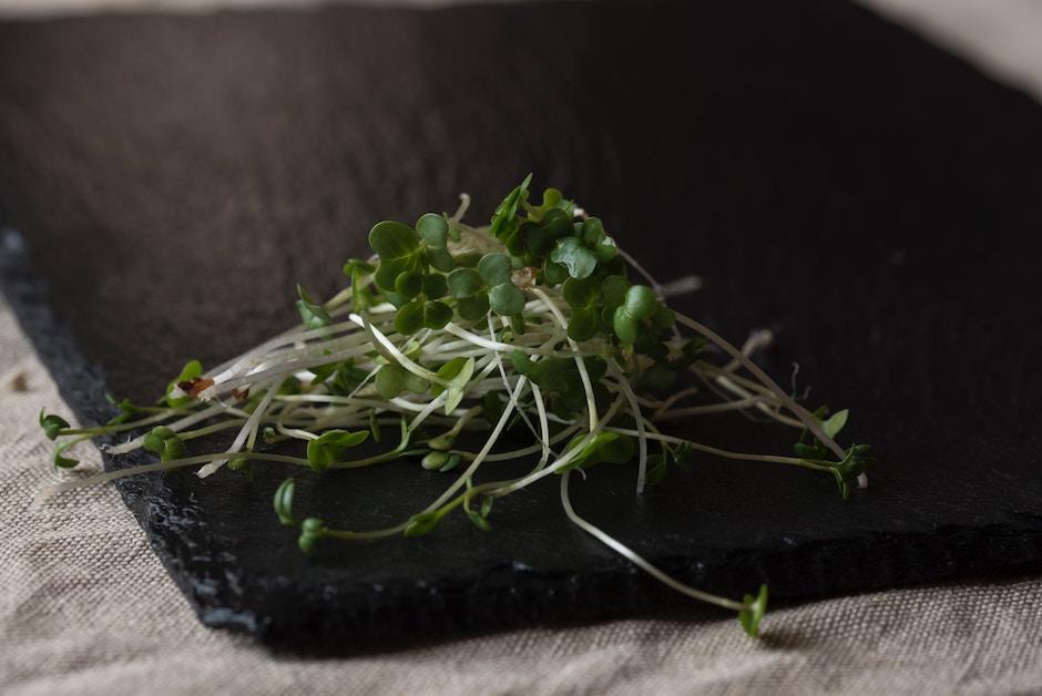 Sprossen wachsen aus Hülsenfrüchten, Getreide, Nüssen oder Gemüsesamen und sind reich an gesunden Kohlenhydraten, Vitaminen, Mineralstoffen und sekundären Pflanzenstoffen. -Fotocredits: Joanna Kosinska/Unsplash