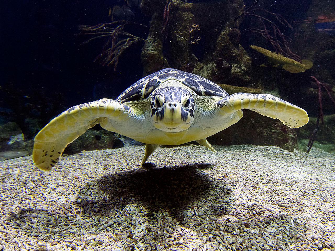 Die Aquarien müssen gekühlt werden - Fotocredit: Haus des Meeres/DanielZupanc