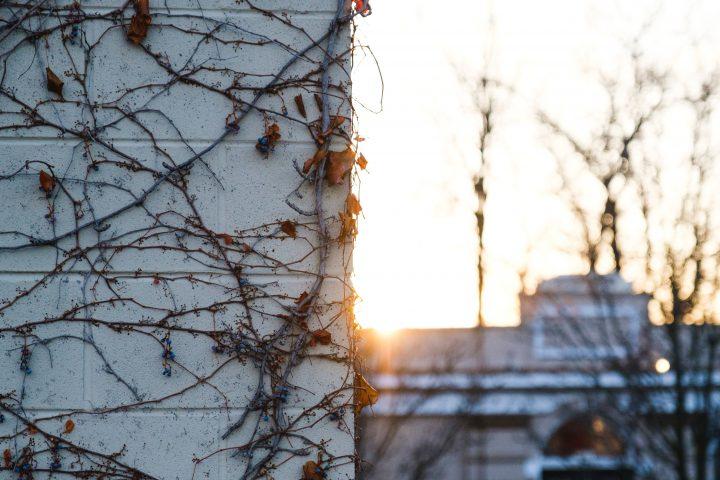 Urbane Vegetation im Winter - wem fällt sie auf? / Fotocredit: Matt Hoffman