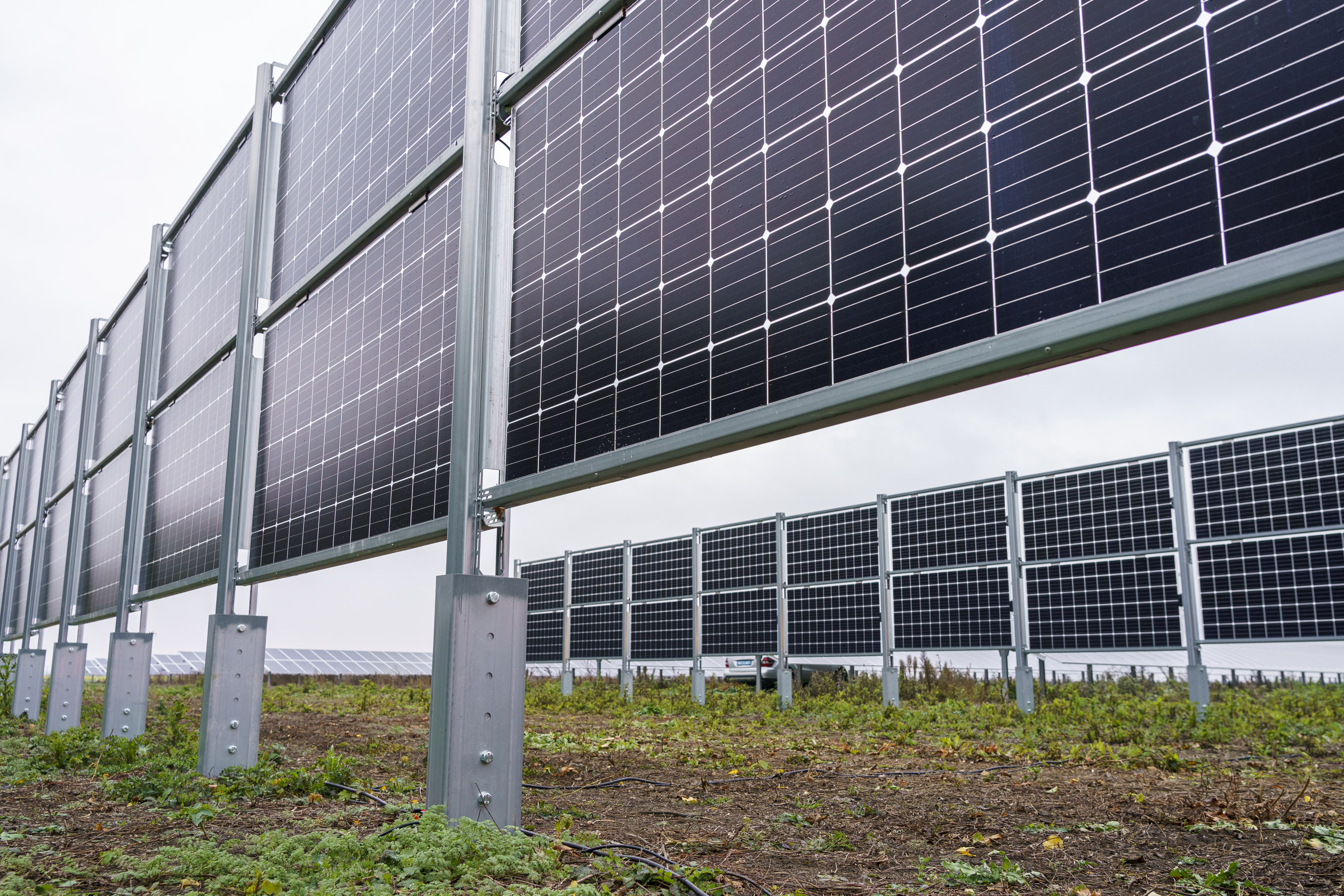 Durch die senkrecht montierten Solarmodule können landwirtschaftliche Flächen doppelt genutzt werden. Foto: © Wien Energie/Christian Hofer