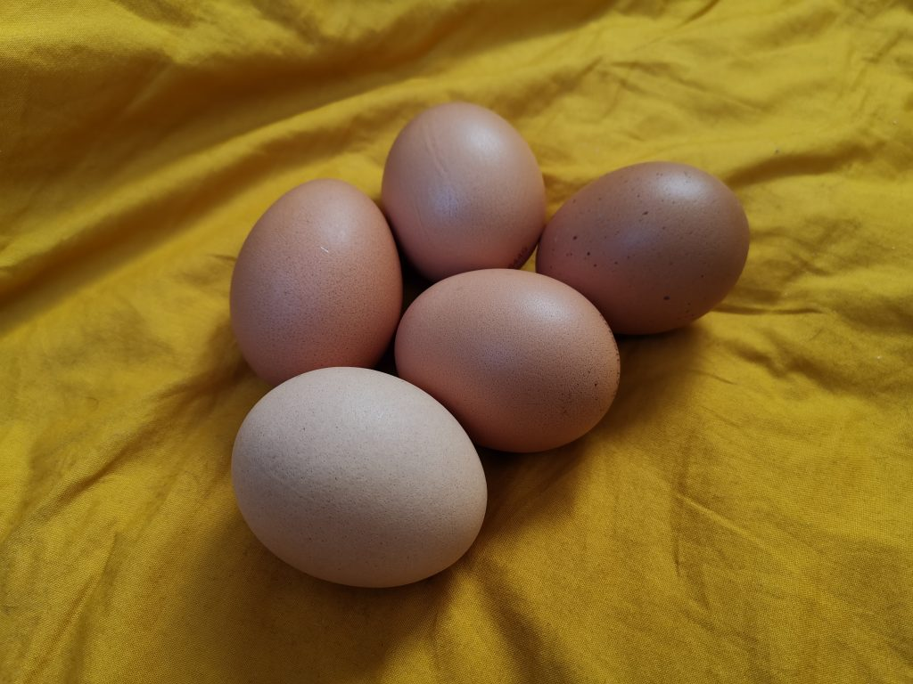 Heute sind Eier unser Superstar!, Fotocredit: Energieleben Redaktion