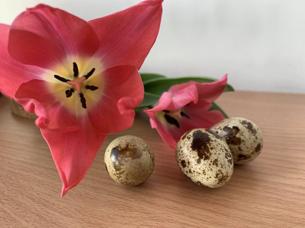 Wachteleier sind wunderschön gesprenkelt und verleihen jeder Ostertafel einen elegant-rustikalen Touch!, Fotocredit: Energieleben Redaktion