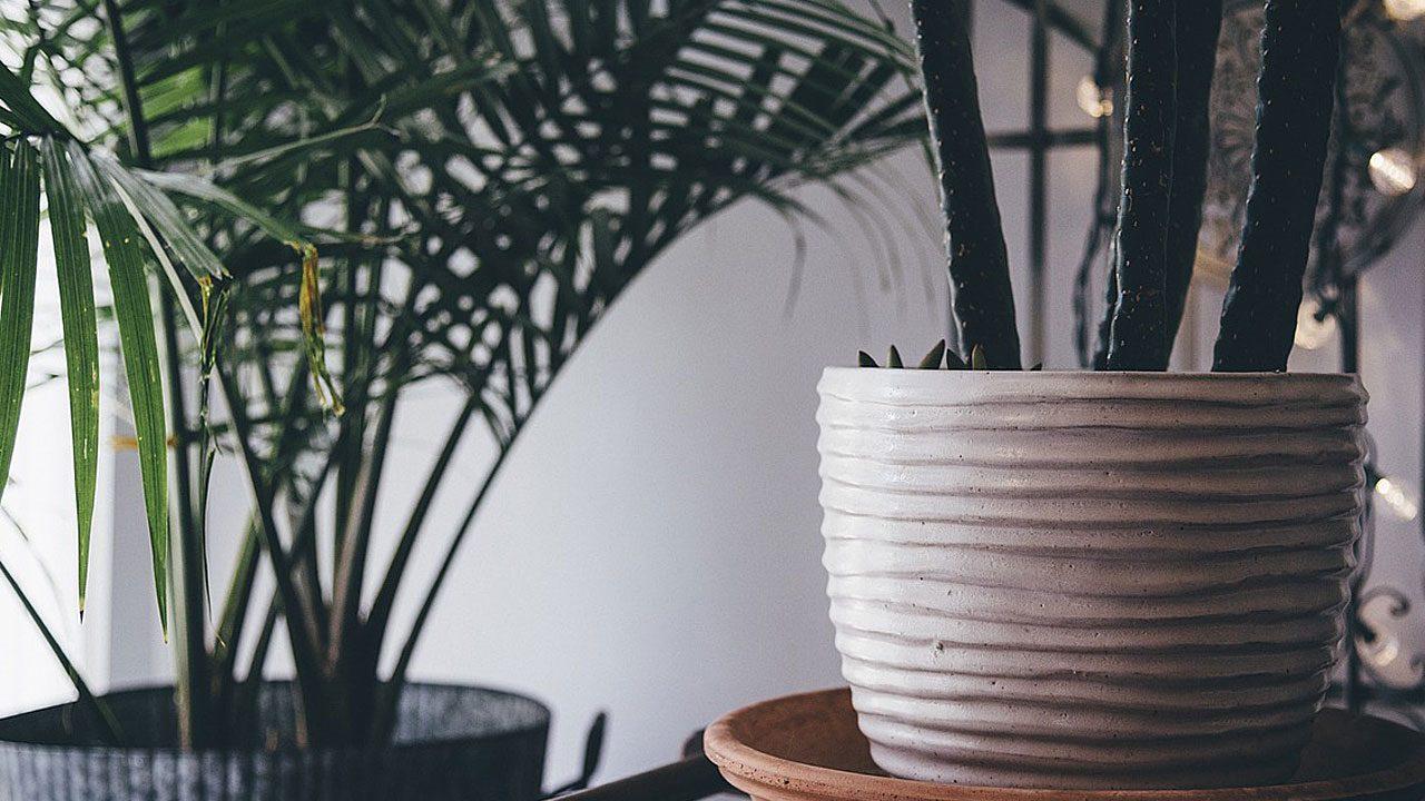 6. Junge Pflanzen regelmäßig umtopfen. - Fotocredit: Pixabay/Pexels