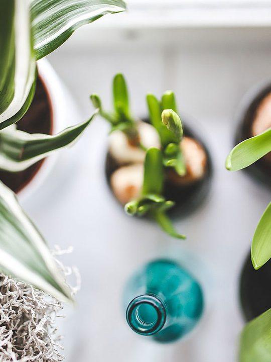 Zimmerpflanzen - Fotocredit: Pixabay/kaboompics