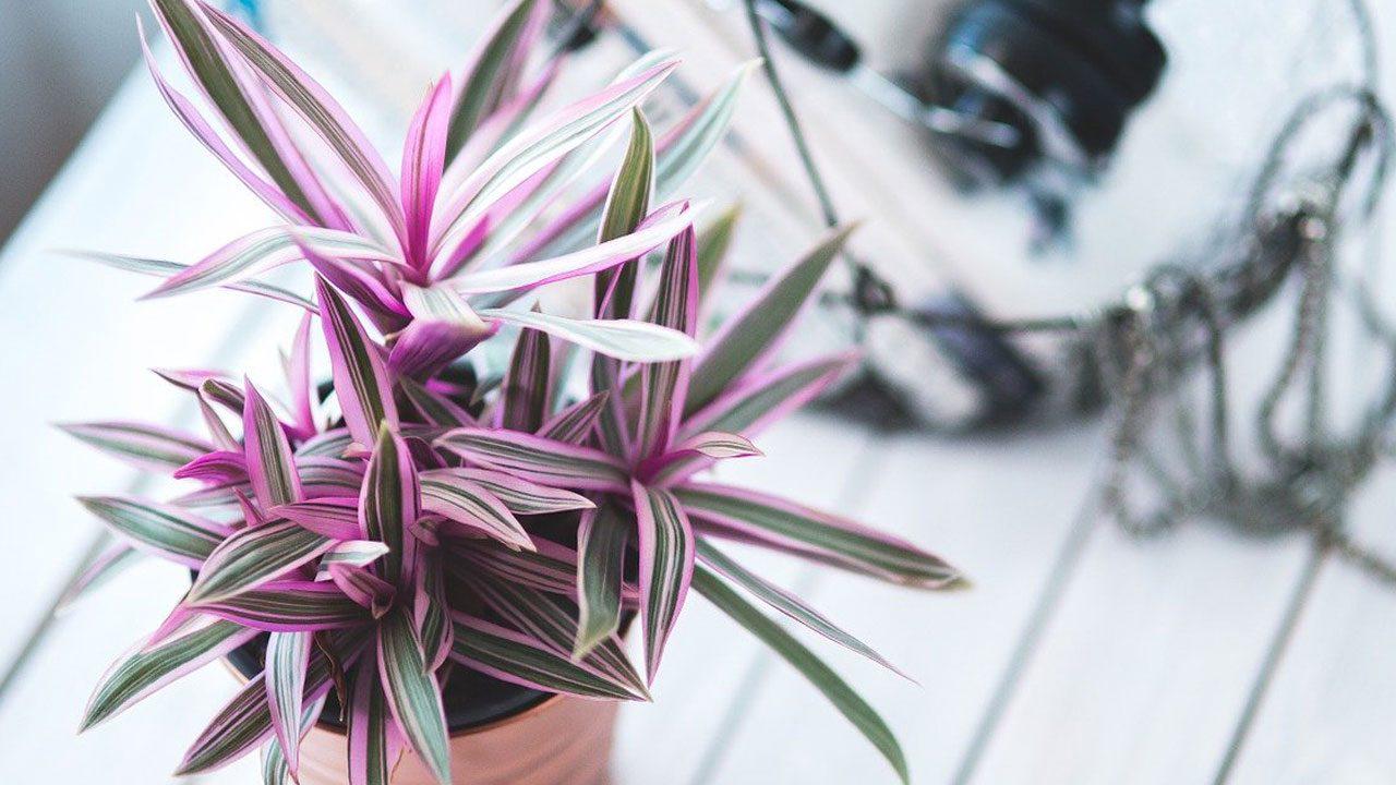 7. Staube deine Pflanzen regelmäßig ab - Fotocredit: Pixabay/kaboompics