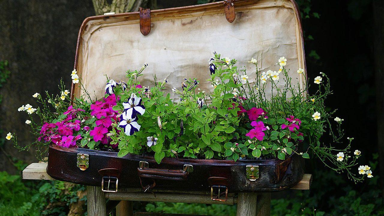 1 Als Dünger im Garten - Fotocredit: Pixabay/suloka