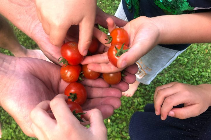 Frische Tomaten essen