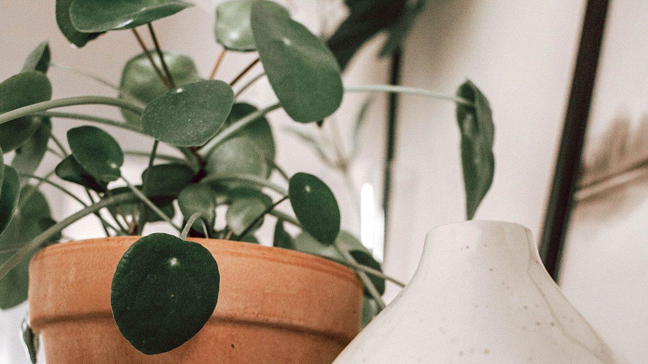 6. Ufopflanze - Fotocredit: Unsplash/Antonia Kofod