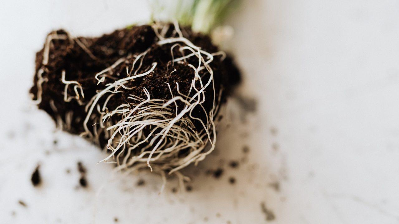 Wurzeln und Erde aus alten Topfpflanzen kann im Kompost eine neue Bestimmung finden. Bild: Pexels