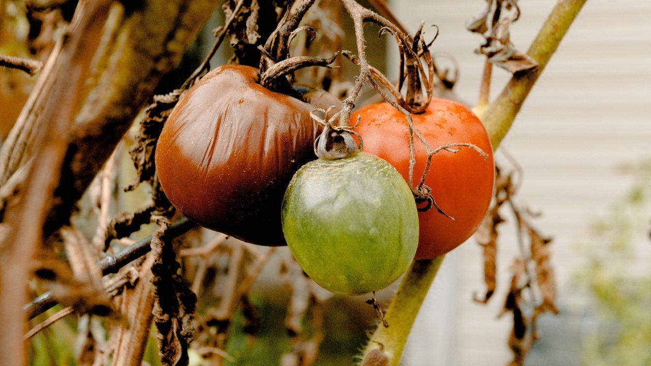 Obst und Gemüsereste dürfen auf keinem Komposthaufen fehlen. Bild: Pexels