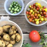Gemüseernte im Herbst