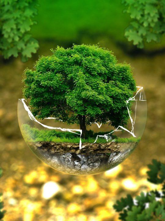 Das Klima und damit unsere Erde schützen? Die Befürworter für klima- und energiepolitische Maßnahmen in Österreich werden immer mehr! Fotocredit: © ejaugsburg / Pixabay