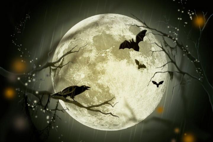 Gruselnacht: Wir zeigen dir, welche DIY-Kostüme du dir auch noch Last Minute für Halloween selbst kreieren kannst. Fotocredit: © Larisa Koshkina/Pixabay