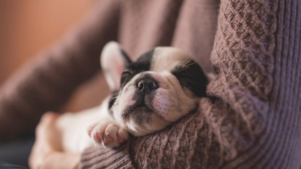 9. Hol dir ausreichend Schlaf! - Fotocredit: Pixabay/Pexels