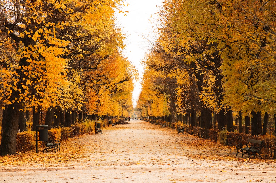 Bäume Herbst bunte Blätter November
