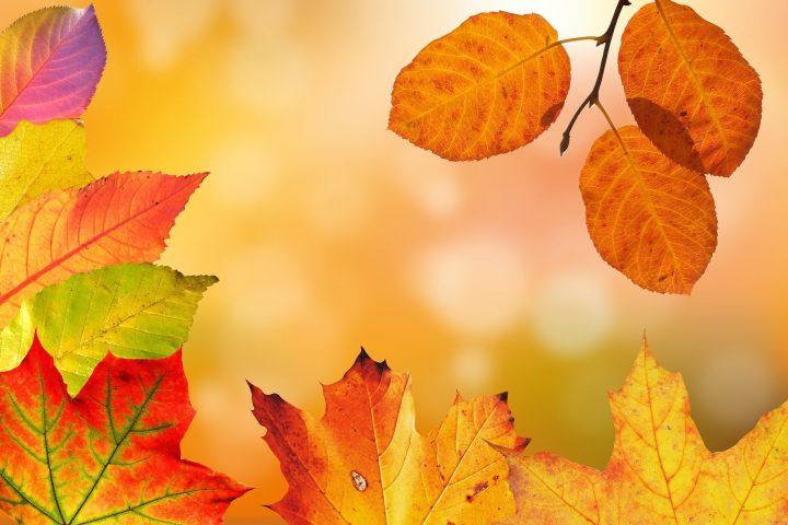 Der Herbst ist noch viel schöner als wir denken – vor allem dann, wenn wir ihn uns mit Ausflügen und Erlebnissen besonders schön gestalten! Fotocredit: © stux/pixabay