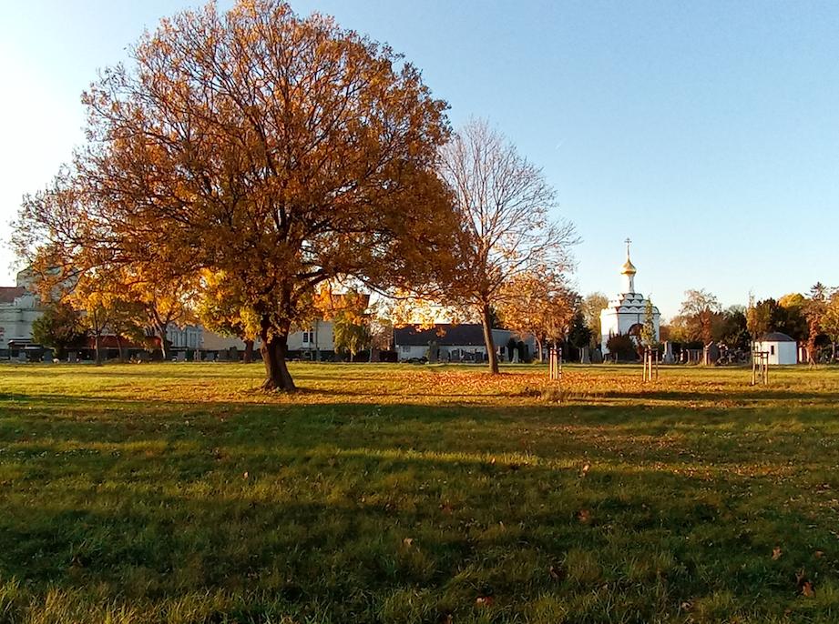 Jede Jahreszeit hat ihren Charme am Zentralfriedhof. Im Herbst machen Aussichten wie diese den Friedhof zu einem wertvollen Ausflugstipp.