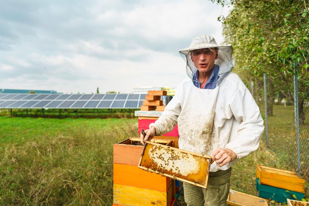 Im Sommer ist trägt das BürgerInnen Solarkraftwerk Liesing dazu bei, den städtischen Bienenbestand zu sichern und zu erweitern. Fotocredit: © Wien Energie/FOTObyHOFER/Markus Wache