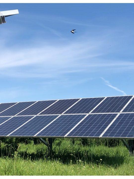 Das erste BürgerInnen-Solarkraftwerk beim Kraftwerk Donaustadt geht eine Symbiose mit einem wichtigen Lebensraum ein.