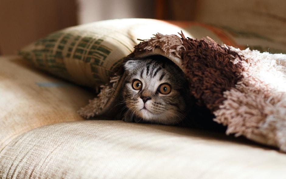 Katzen sind sehr neugierige Tiere - immer auf der Jagd nach dem nächsten Abenteuer. -Fotocredits: Mikhail Vasilyec/unsplash.com