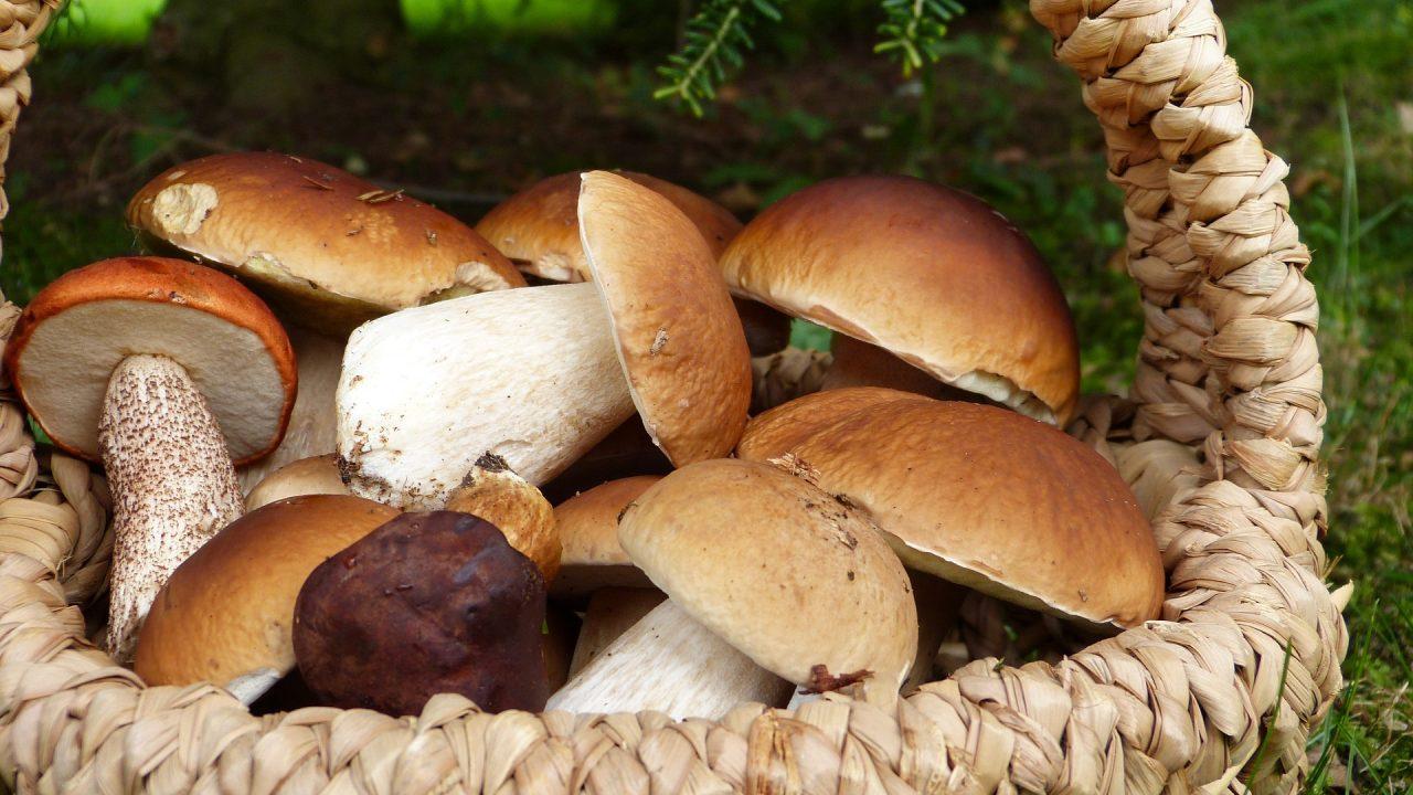 Im Herbst ist das Sammeln von Schwammerl für viele ein beliebtes Hobby. Steinpilze kann man dabei mit etwas Glück noch relativ spät im Jahr finden. Fotocredit: © silviarita/Pixabay