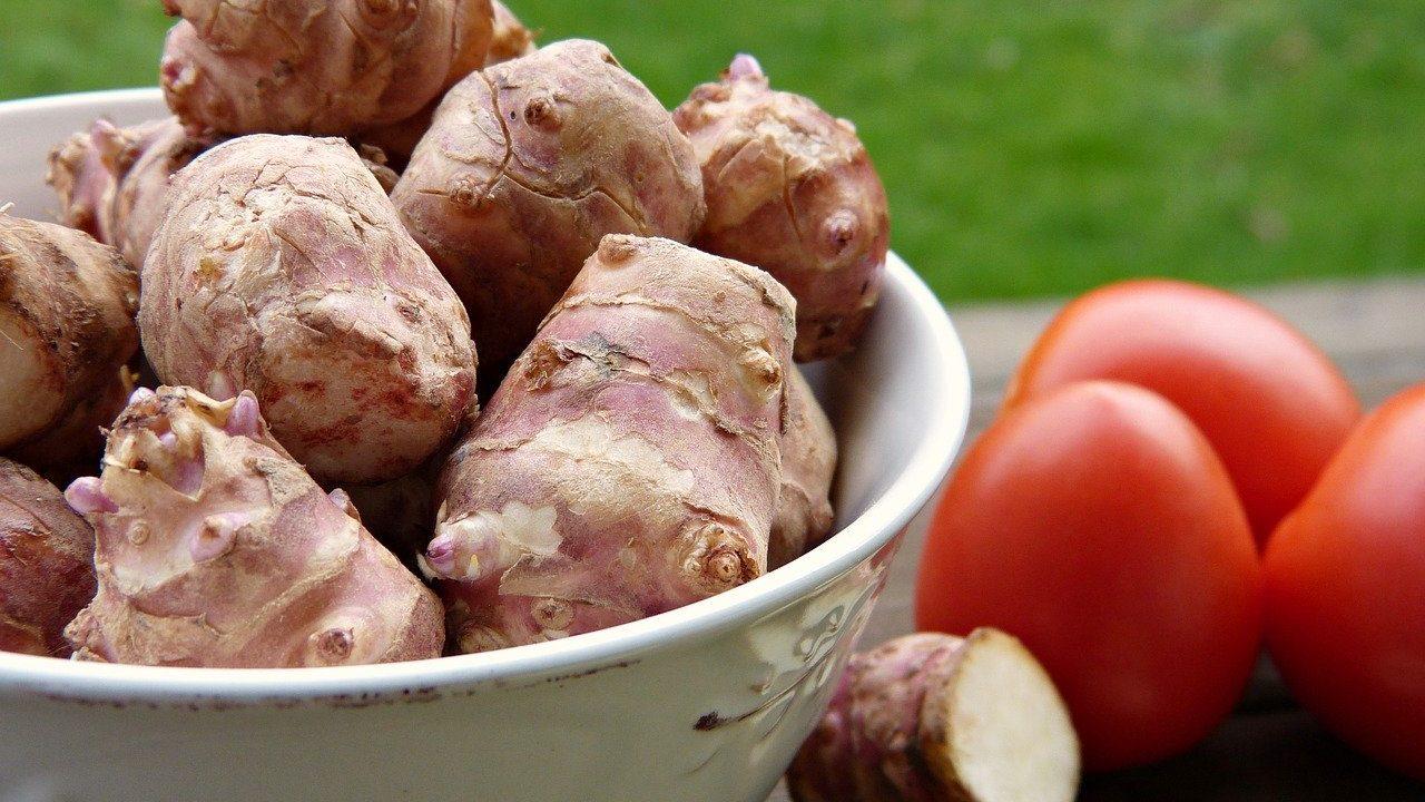 Die essbaren Knollen können vom Herbst bis ins Frühjahr geerntet werden und sind daher in unseren Breiten von Oktober bis März aus regionalem Anbau erhältlich. Fotocredit: © silviarita/Pixabay