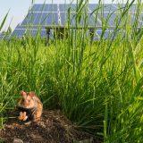 Dieses Bild zeigt deutlich: Solarenergie und Natur können Hand in Hand gehen. Fotocredit: © Wien Energie/Wiener Wildnis – Popp-Hackner