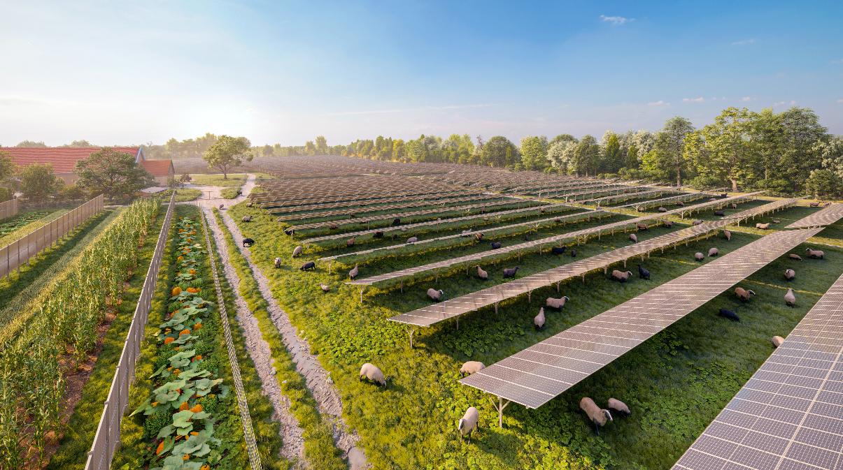 Auf gesamt 12,5 Hektar ist die größte Solarkraftanlage des Landes zum Teil mit doppelseitigen PV-Modulen ausgestattet. Diese bieten auch Schafen eine schattige und windgeschützte Weidefläche. Fotocredit: © Wien Energie/Merlin Bartholomäus