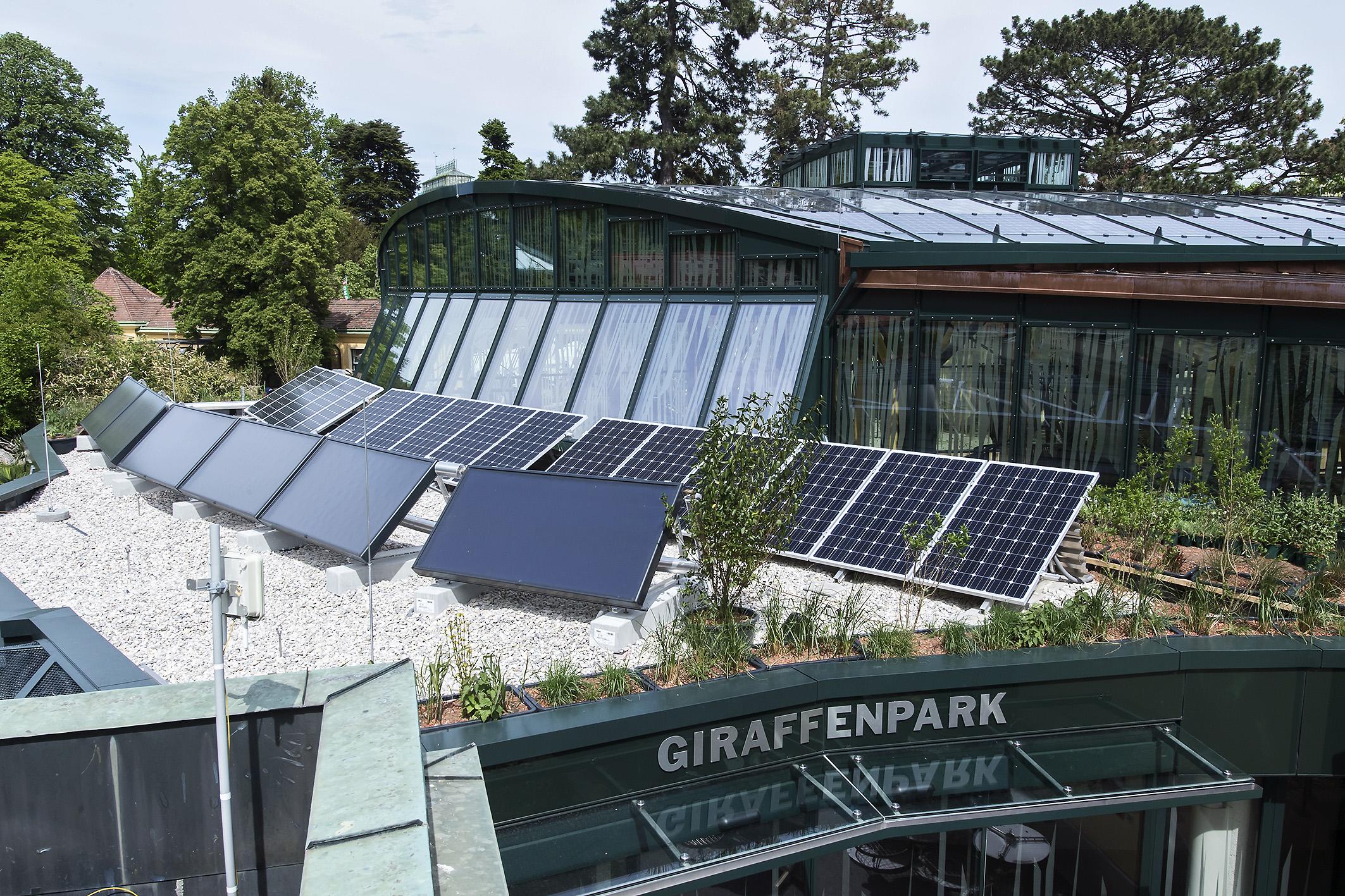 Solaranlagen zu nutzen, ist heute fester Bestandteil des Energiekonzepts des Tiergarten Schönbrunn. © Daniel Zupanc
