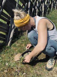 Kräuter sammeln mit Anja Fischer