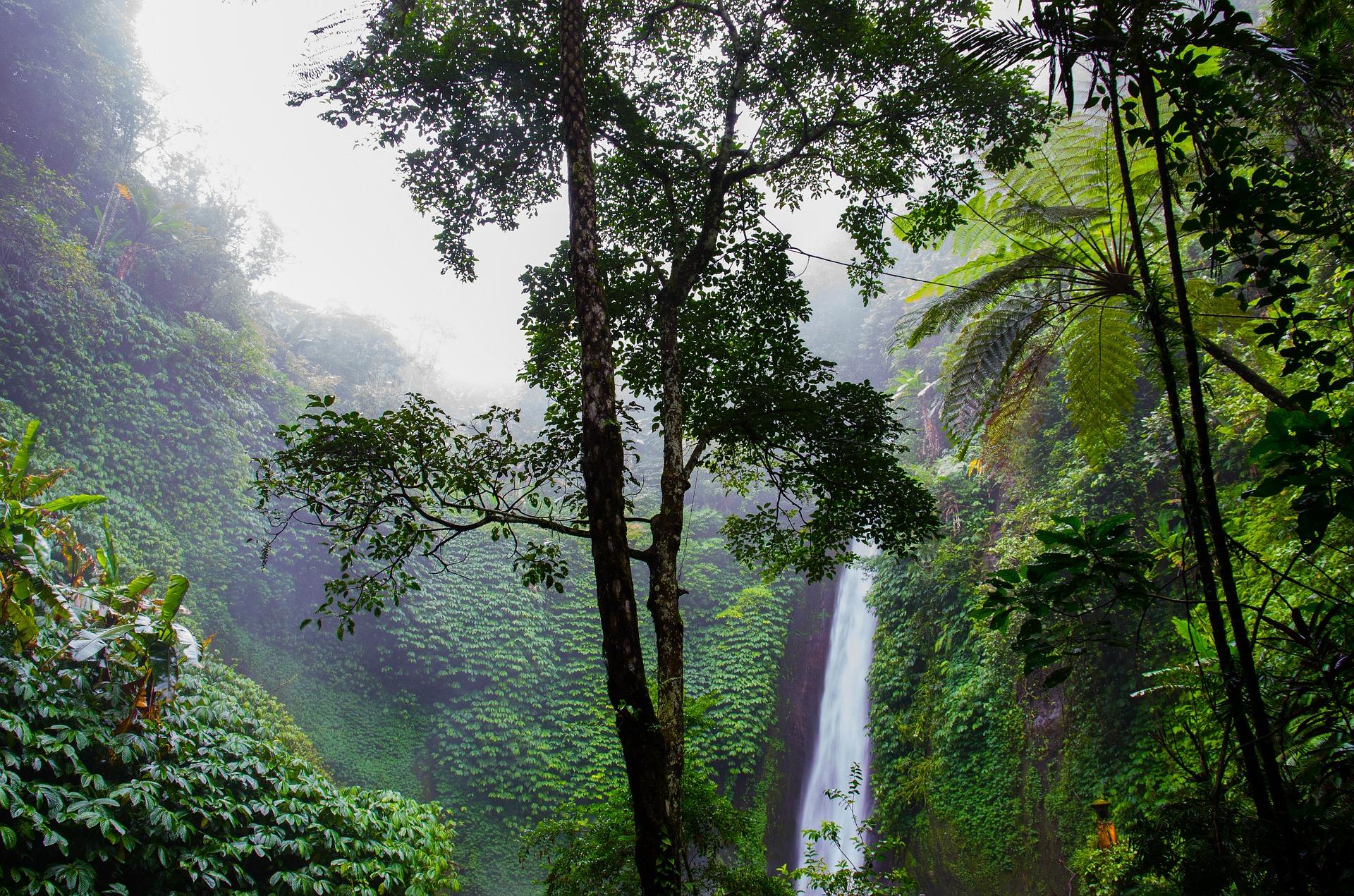 Unsere Tropenwälder und die Bäume zu schützen, ist ein zentraler Punkt bei der Bekämpfung der Klimaprobleme. Fotocredit: © Rudy and Peter Skitterians/Pixabay