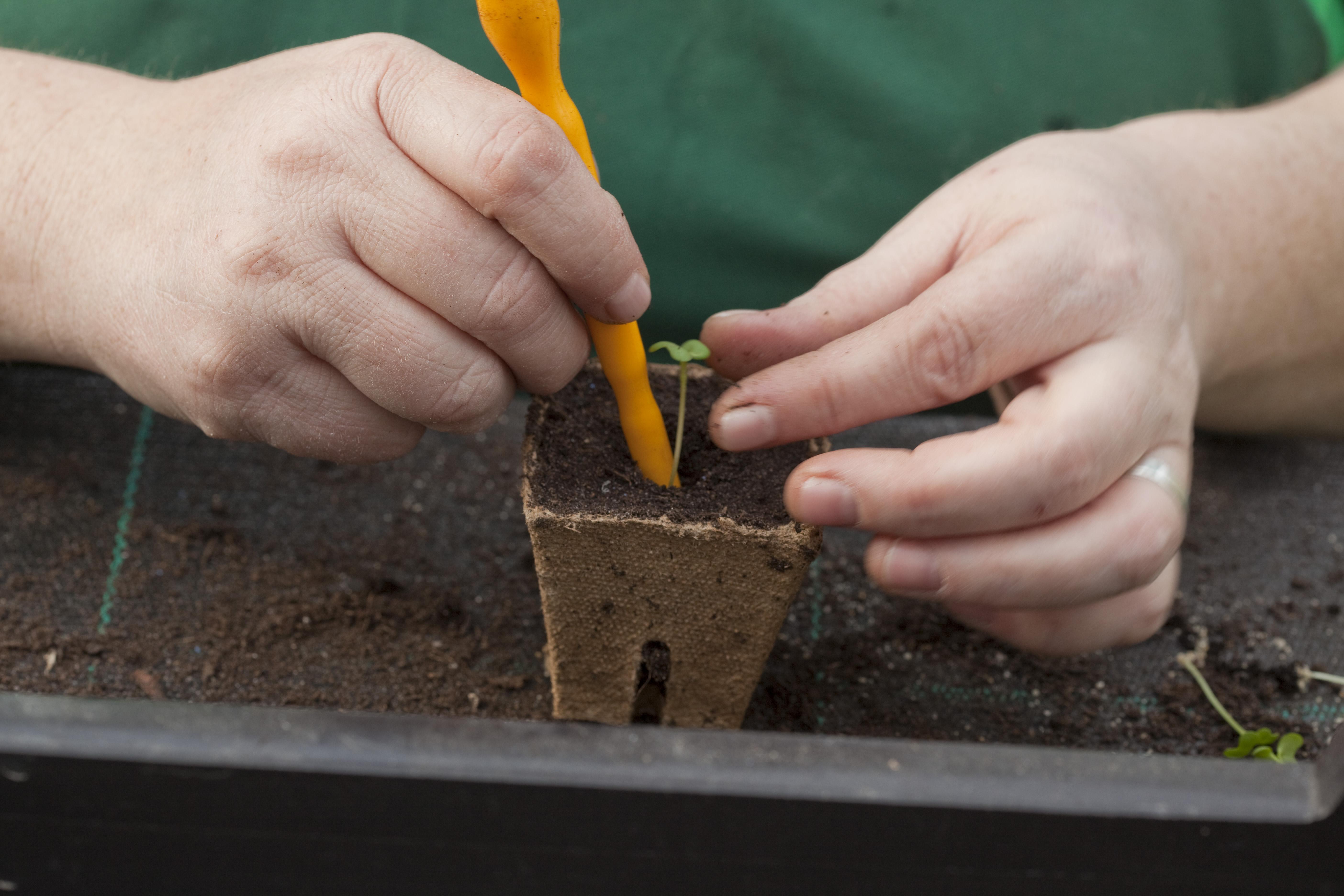 So wie jede Pflanze wächst, hat auch WUK bio.pflanzen einmal klein angefangen. Fotocredit: © WUK