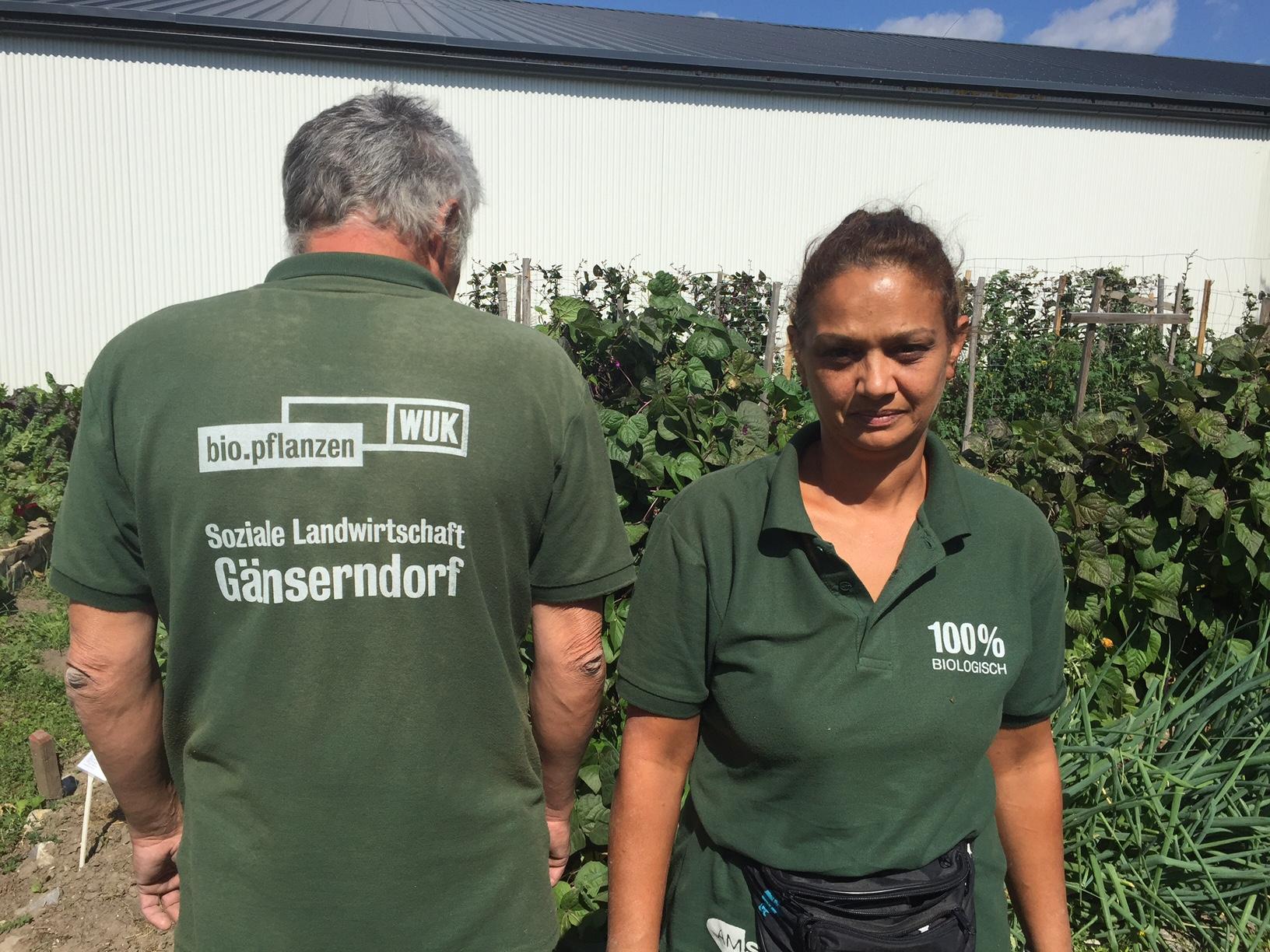 Derzeit gibt es bei dem Projekt 24 Plätze für Langzeitarbeitslose aus dem Bezirk Gänserndorf. Fotocredit: © WUK