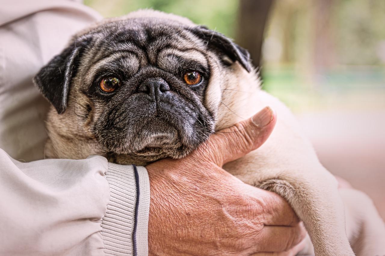 Gerade für ältere Menschen, die sich häufig einsam fühlen, sind die Berührungen im Umgang mit ihren Haustieren oft von erheblicher Bedeutung hinsichtlich des Wohlbefindens. Fotocredit: © winterseitler/Pixabay