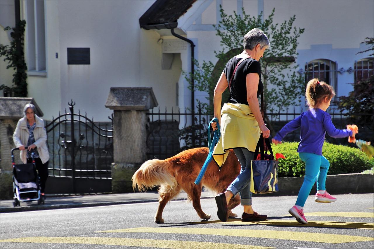Bewegung mit Hunden tut gut und reduziert Stress. Das Streicheln allerdings auch! Fotocredit: © pasja1000/Pixabay