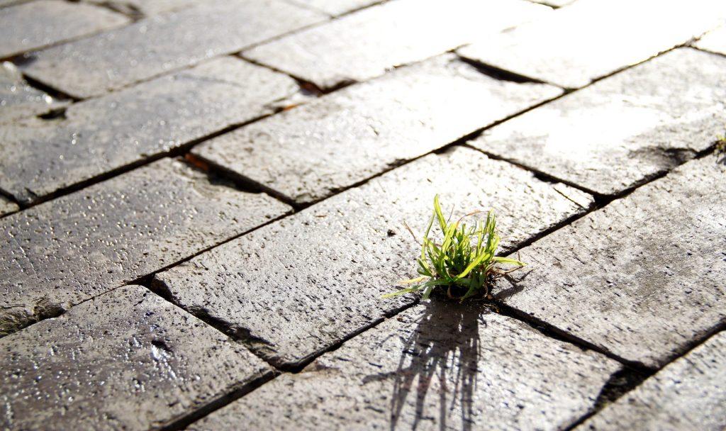 Stadtplanung mit viel Grün? Zumindest digital kannst du das in deiner Straße jetzt ganz nach deinen Wünschen umsetzen. Fotocredit: © Dominique Knobben/Pixabay