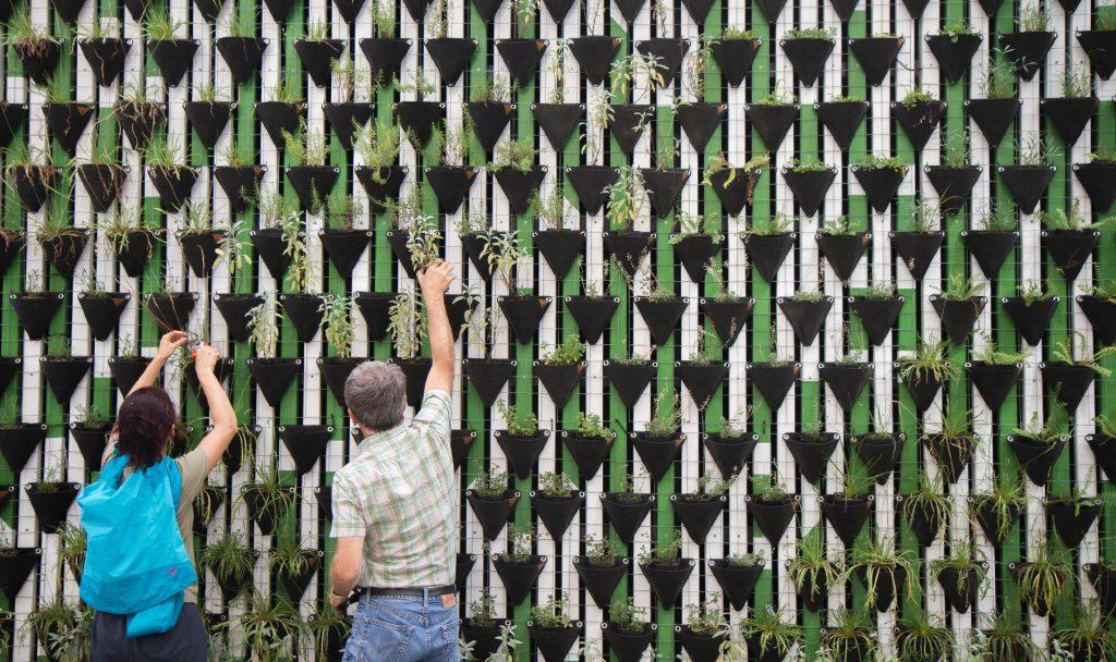 Anstatt Ackerflächen und Wasser zu verbrauchen, könnte die vertikale Landwirtschaft mit wenig Platz- und Wasseraufwand auch Städtern ermöglichen, jederzeit frischen Salat zu ernten. Foto: © Daniel Funes Fuentes/Unsplash