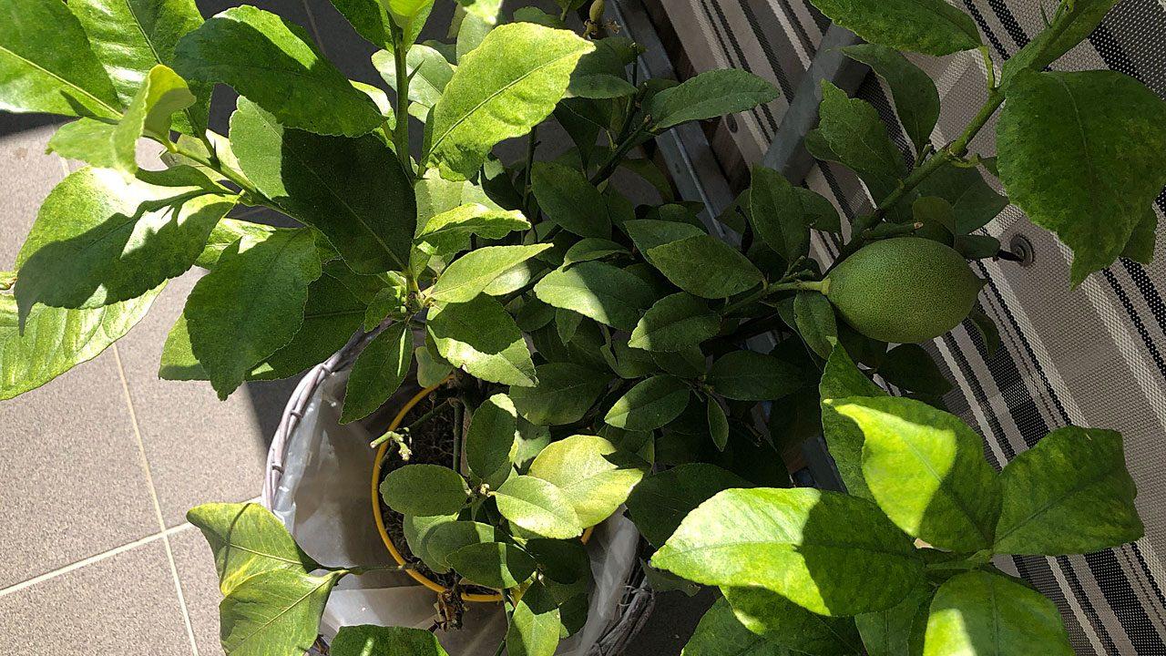 2. Empfindliche Pflanzen vor Frost schützen. - Fotocredit: Energieleben Redaktion