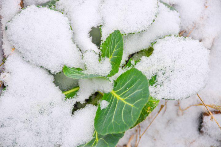 winter©Michaela Titz littlebee.at