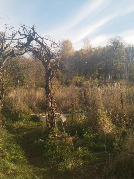 Auch umgedrehte, entwurzelte Bäume können als Baumaterial dienen. - Fotocredit: Elisabeth Demeter